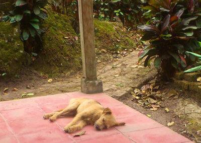 nicaragua-cabana-bobby-10