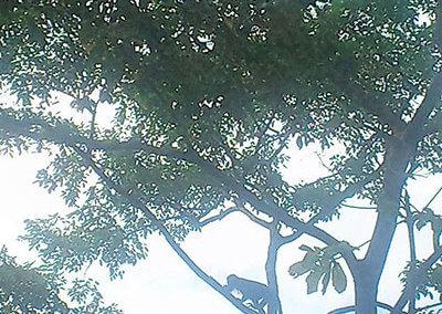 nicaragua-cabana-bruellaffe-3