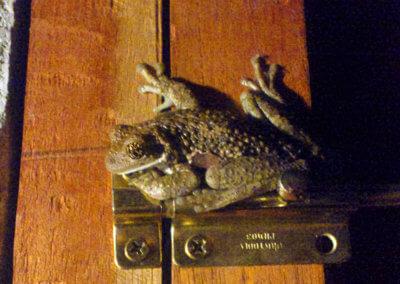 nicaragua-cabana-frosch-12