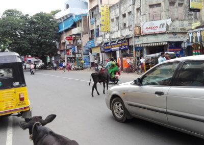 Indien-Chennai-streetview-streetview-7