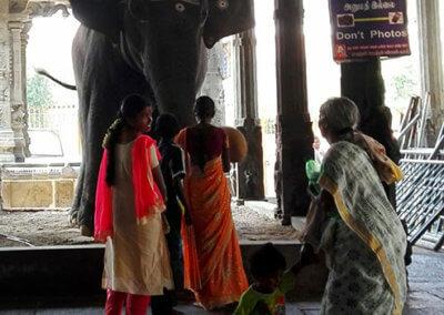 Indien-Tiruvannamalai-Elefant-Tempel-13
