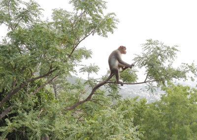 Indien-Tiruvannamalai-Wanderung-Arunachala-1