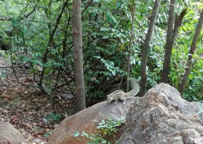 Indien-Tiruvannamalai-Wanderung-Arunachala-6